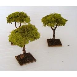 Medium lichen tree for...