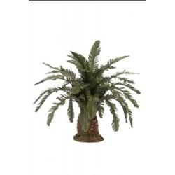 Palma nana cm 12