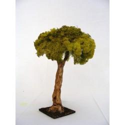 Small oak for nativity scene