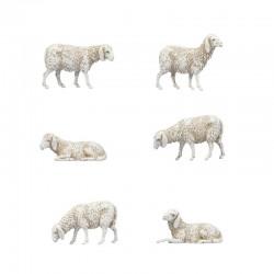 Busta con 6 pecore...