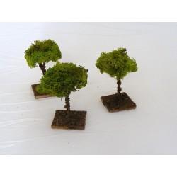 Small lichen tree for...